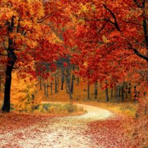 nature-red-forest-leaves-33109